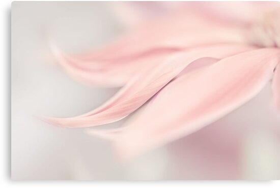 baby pink by Ingrid Beddoes