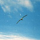 The Birds by Mandy Kerr