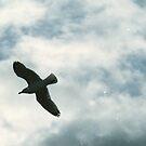 The Birds (4) by Mandy Kerr