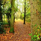 Leaves Lead The Way by Vicki Spindler (VHS Photography)