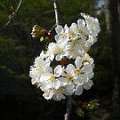 Early Spring by debbiedoda