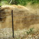 Bellowing Bull Kicks Up A Dust Storm by Eve Parry