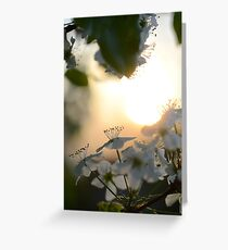 Late Eve Flowers 3.22.12 1  Greeting Card