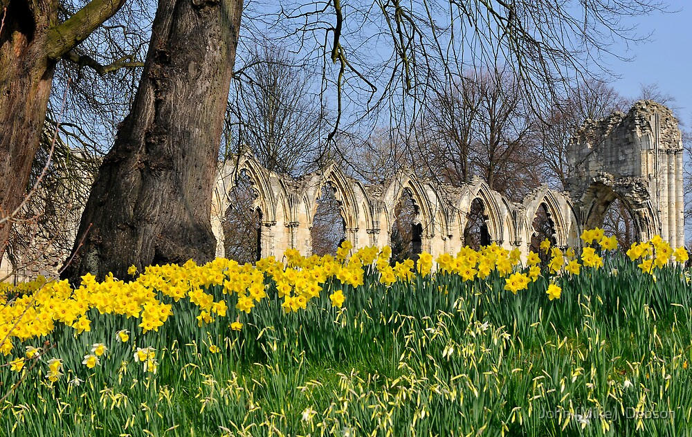 The Museum Gardens by John (Mike)  Dobson
