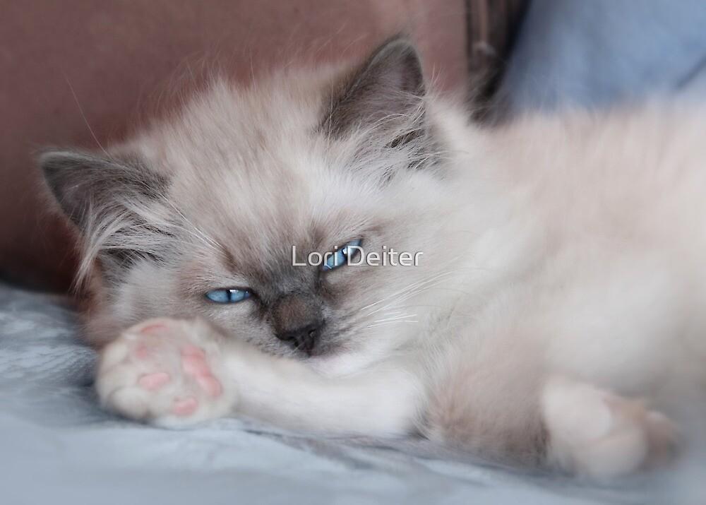 Fighting Sleep by Lori Deiter