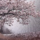 Cherry Blossoms by Cora Wandel