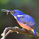 """ Azure Kingfisher "" Marlo Vic. by helmutk"