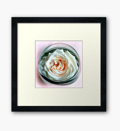 White Rose in Glass Framed Print