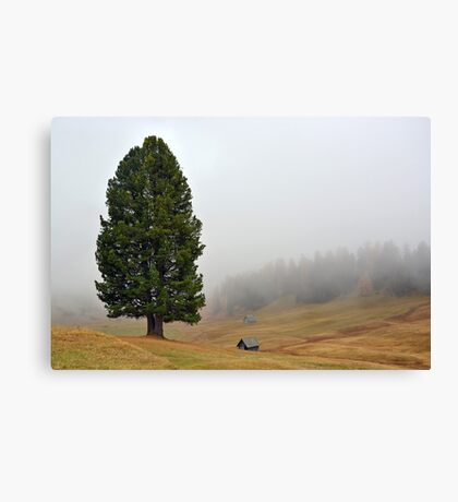 One tree with two stems in the mist Canvas Print