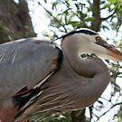 Great Blue Heron No.3 by Sheryl Unwin