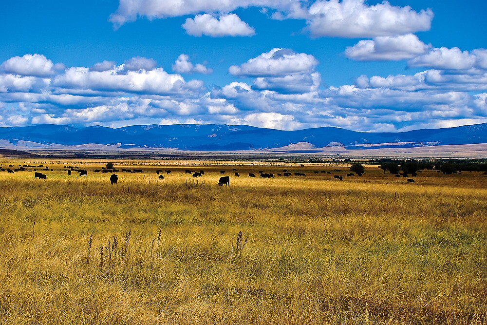 The Cattle Are Standing Like Statues by Bryan D. Spellman