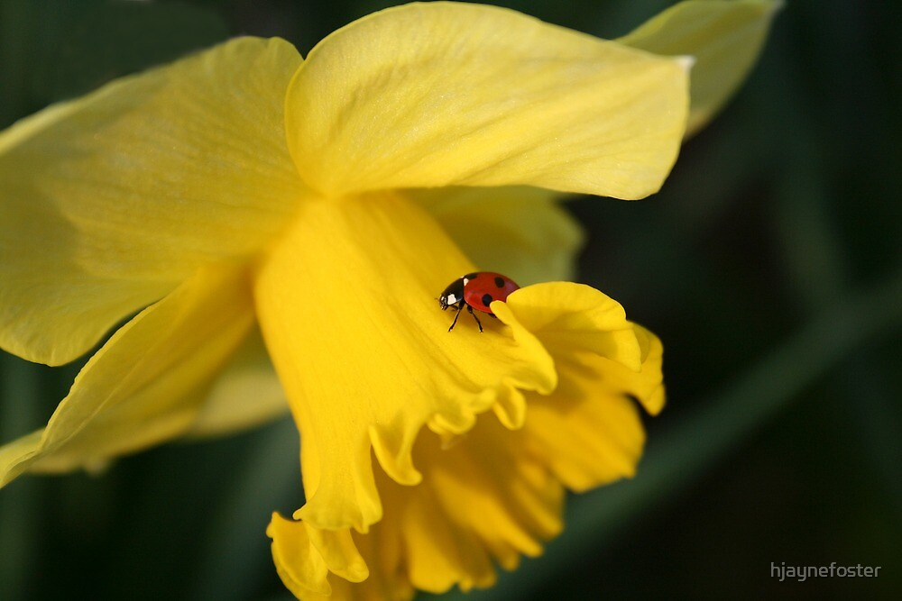 Spring has sprung by hjaynefoster