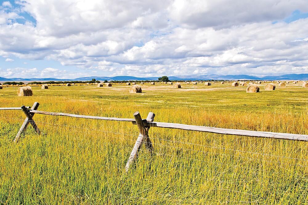 Fence, Bales by Bryan D. Spellman