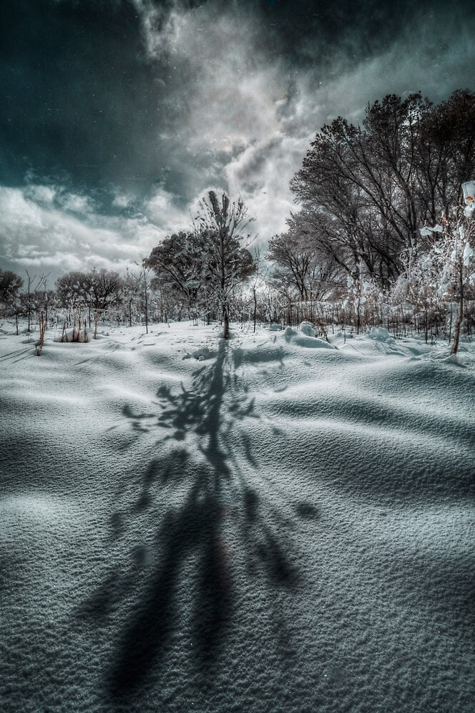 Long Shadow of Winter by Bob Larson