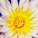 Heart of a water lily by Irene  van Vuuren