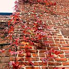 Ivy Growing Higher Every Day - Ivanhoe Mill and Wheelhouse, Paterson NJ by Jane Neill-Hancock