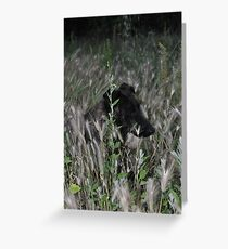 hide & seek Greeting Card