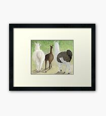 Llama Butts Camelid Farm Animals Cathy Peek Framed Print