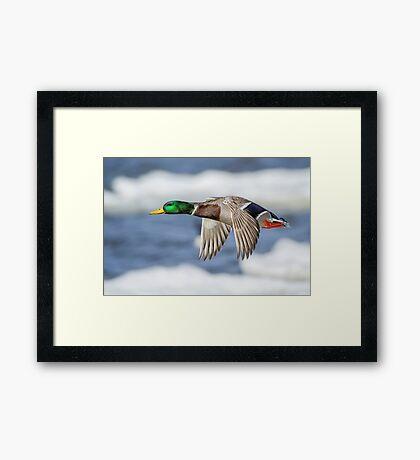 Bye Bye Birdie Framed Print
