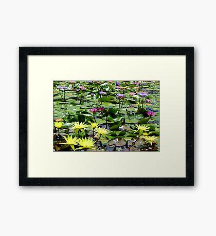 Waterlily Pond - Wallis Creek Water Gardens, Mulbring Framed Print