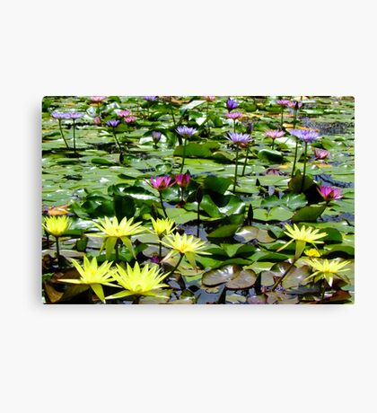Waterlily Pond - Wallis Creek Water Gardens, Mulbring Canvas Print