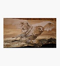 snowy owl anyone? Photographic Print