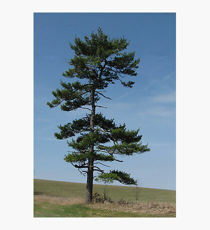 Lone Pine Photographic Print