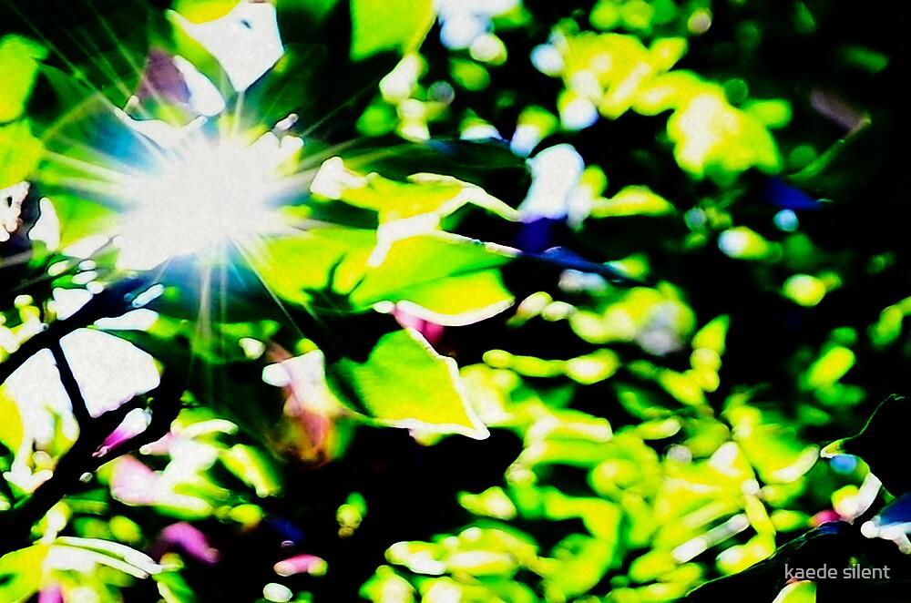 glint by imagesbyhanson