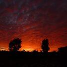 Pre-Dawn Sky by Michelle Cocking