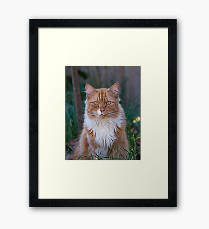 I Come to Visit Framed Print