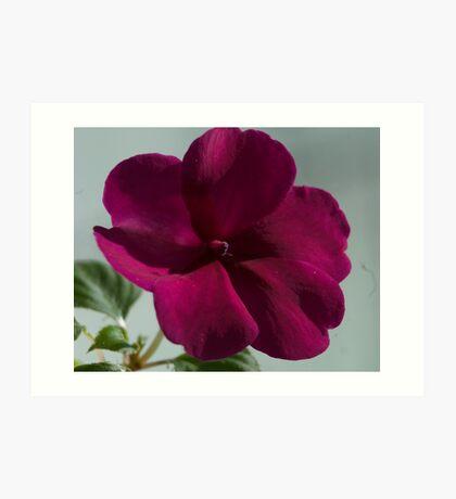 Flower in the Window Art Print
