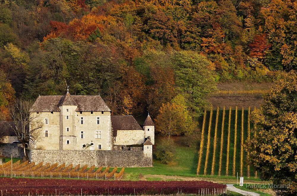 Autumn in the french vineyard by Patrick Morand