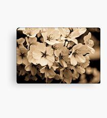 Sepia Cherry Blossoms Canvas Print