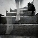 Stairs by Laura Melis