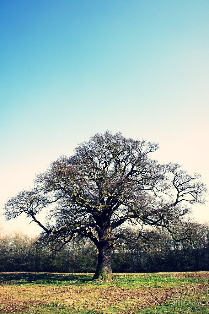 Tree and Sky in Springtime by Phill Sacre