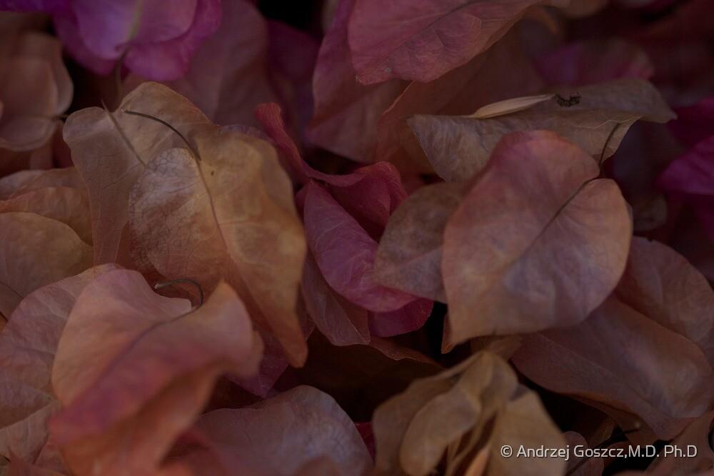 ♥♥♥ Kalinichta Kriti ♥♥♥  by Ανδρέας Brown Sugar . Featured in Greece and All Thlings Hellenic . Mu ine poli efcharisto! 50 views . Thx! by © Andrzej Goszcz,M.D. Ph.D