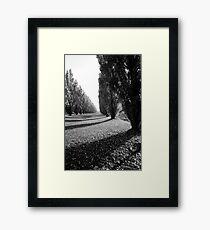 Poplar trees Framed Print