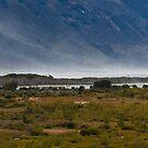 Wetlands by gematrium