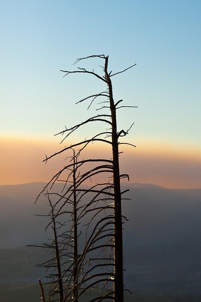 Forest fire by gematrium