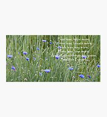 Bachelor's Buttons Quotation Photographic Print