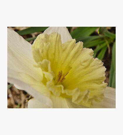 Spring Arose Photographic Print
