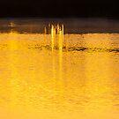 Liquid gold by Rudi Venter