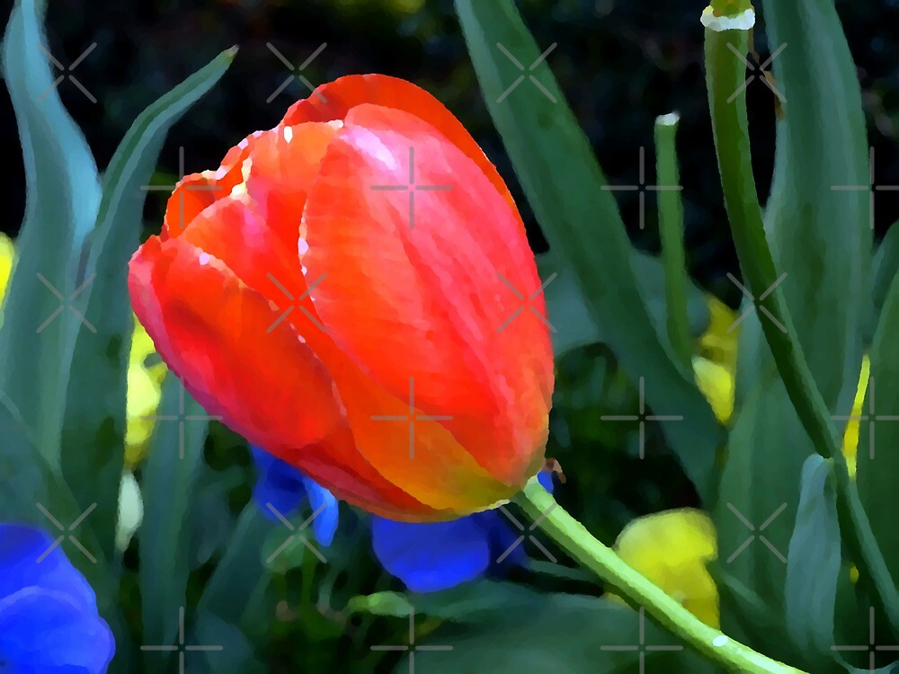 Painted Tulip by Scott Mitchell