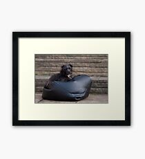 Bailey - Our Patterdale Terrier Framed Print