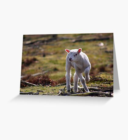 Joy of A Lamb in Spring Greeting Card