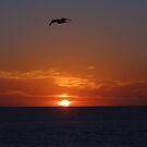 Flying above the Sun - Volando arriba del Sol by PtoVallartaMex