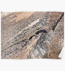 Rock Agama Poster