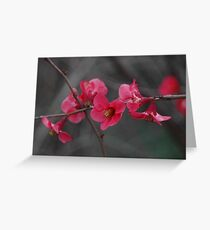japanese quince Greeting Card