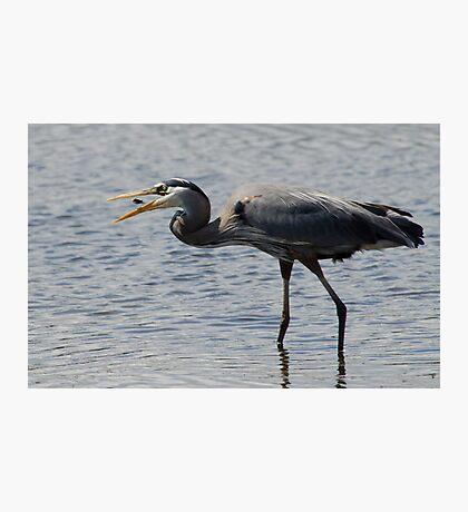Between beaks Photographic Print