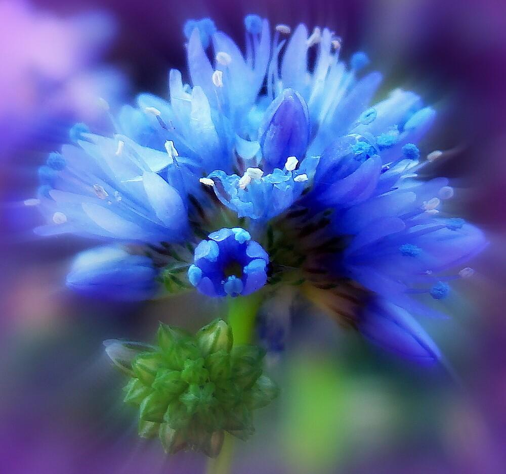 Blue Rainbow by PatChristensen